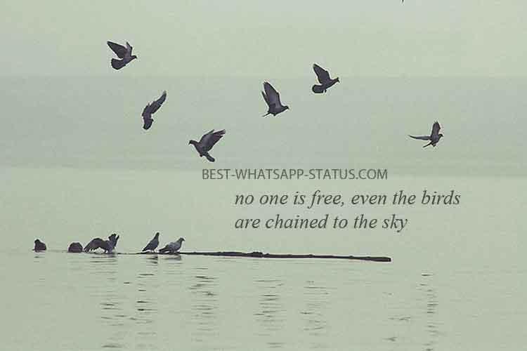 Bird Lover Quotes Whatsapp Status For Bird Lover Do You Love Birds