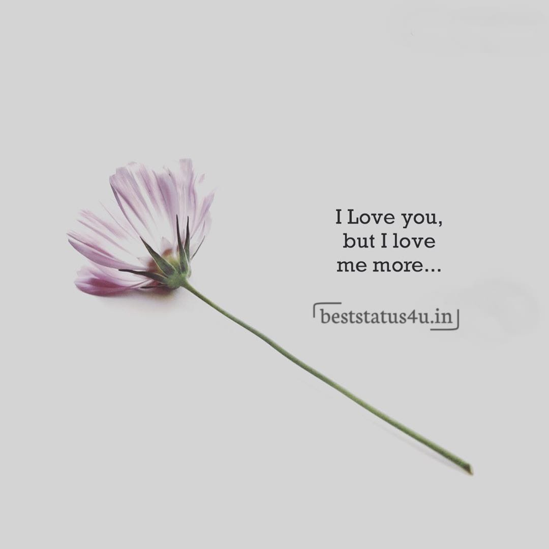 100 Best Quotes For Flower Lovers Cute Whatsapp Status For Flower
